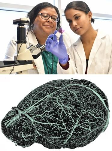 Neuroscience Graduate Program | School of Medicine | West